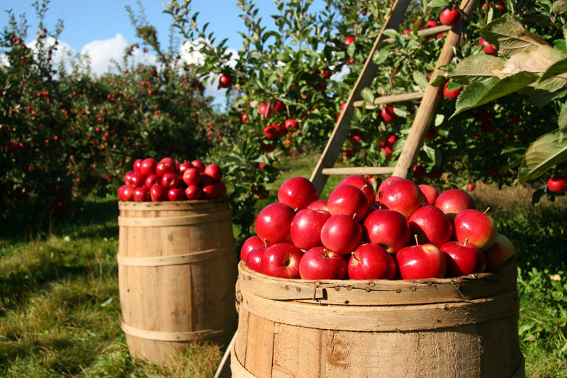 Apple-Orchard-Blog-Spec.jpg